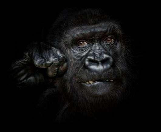 noticias Fotografían a animales en extinción por si las futuras generaciones no llegan a verlos